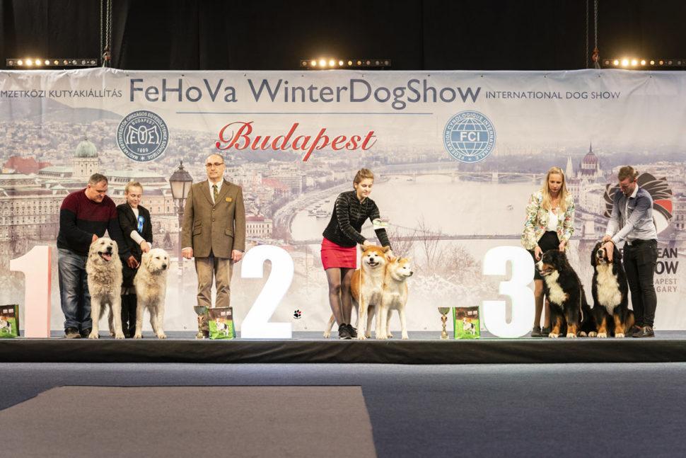 akita inu dog show