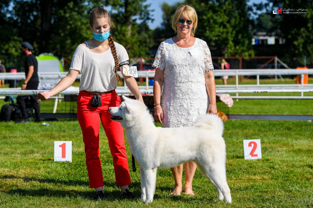 yamazakura go wataky kensha - judge Lenka Frnčová akita inu Excellent 1 CAJC BOJ best junior BOB best of breed