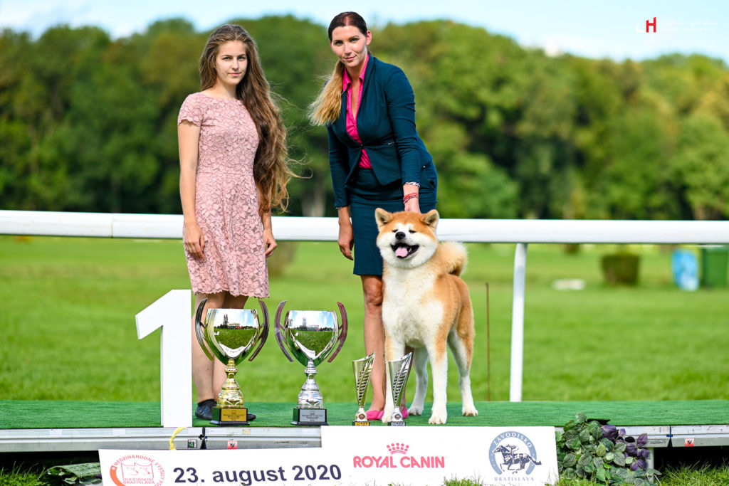 KENJIRO GO Di Casa Saporito - AKITA INU stud dog - CAC CACIB BEST OF BREED BEST IIN GROUP FCI V judge Mikolkova Zuzana judge Martin Sipkovsky